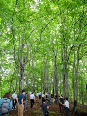 ぶなの森園、現地視察
